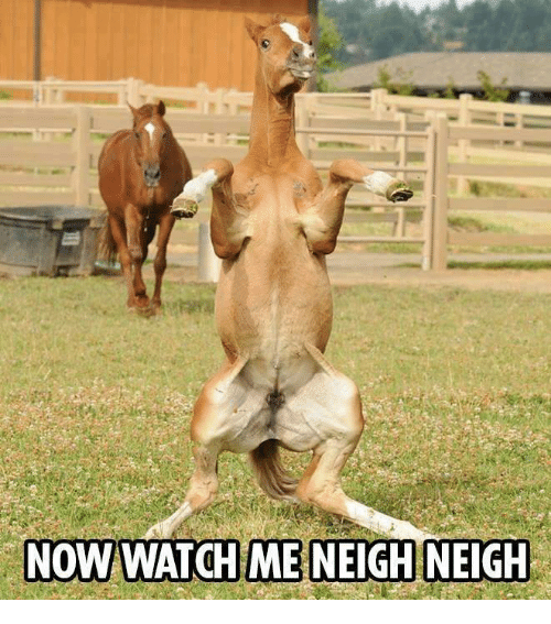 Memes, Watch Me, and 🤖: NOW WATCH ME NEIGH NEIGH