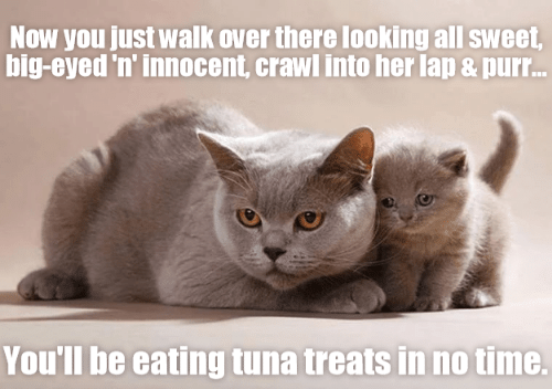 Time, Crawl, and Her: Now you just walk over there looking all sweet,  big-eyed 'n' innocent, crawl into her lap& pur...  You'll be eating tuna treats in no time.