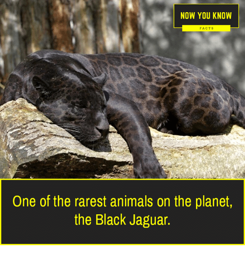Animals, Facts, And Memes: NOW YOU KNOW FACTS One Of The Rarest Animals