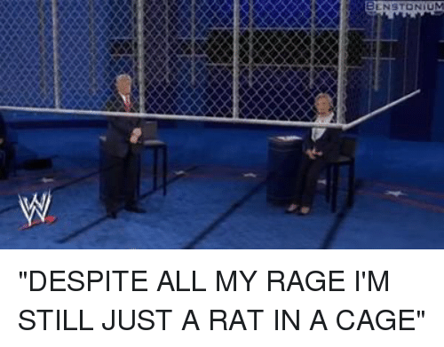 nstonium %EB%B2%B4 despite all my rage im still just a 4644754 ✅ 25 best memes about rat in a cage rat in a cage memes