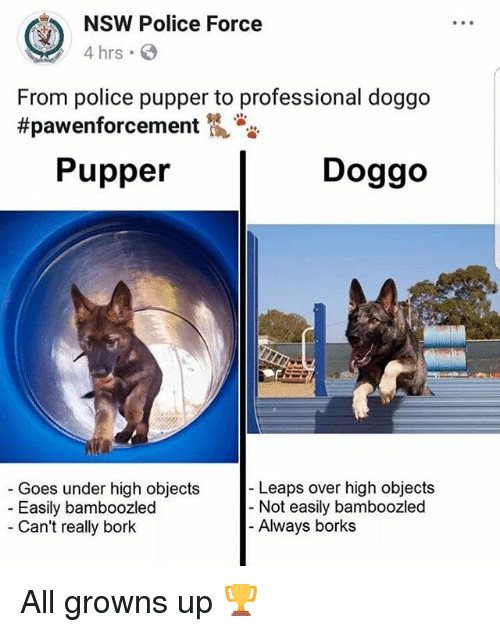 Funny, Police, and Doggo: NSW Police Force  4 hrs  From police pupper to professional doggo  #pawenforcement侃沓沓  Pupper  Doggo  Leaps over high objects  Goes under high objects  Easily bamboozled  Can't really bork  - Not easily bamboozled  Always borks All growns up 🏆