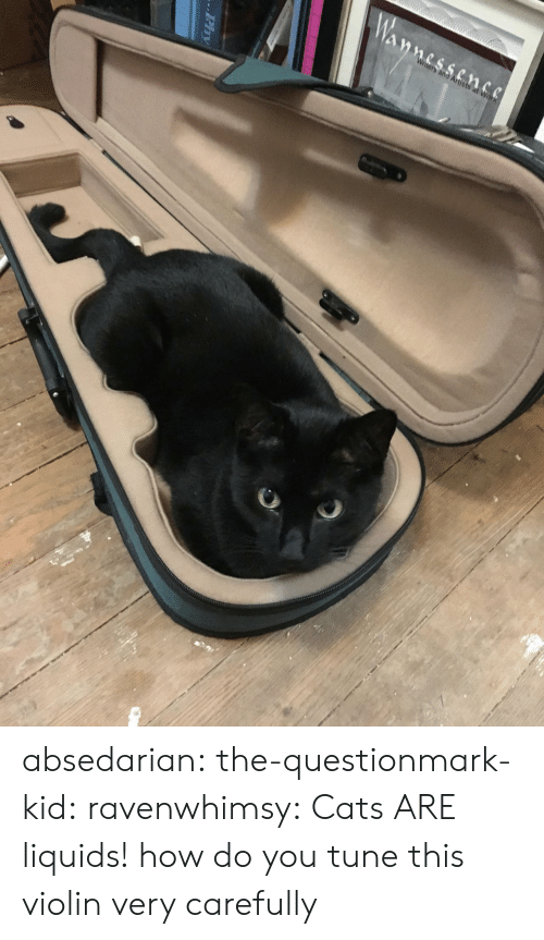 Cats, Tumblr, and Blog: nters and Artists absedarian:  the-questionmark-kid:  ravenwhimsy: Cats ARE liquids!  how do you tune this violin  very carefully