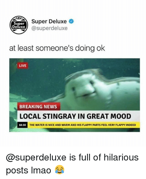 Lmao, Memes, and Mood: NTTSuper Deluxe  Super  Deluxe@superdeluxe  at least someone's doing ok  LIVE  BREAKING NEWS  LOCAL STINGRAY IN GREAT MOOD  18:30  THE WATER IS NICE AND WARM AND HIS FLAPPY PARTS FEEL VERY FLAPPY INDEED @superdeluxe is full of hilarious posts lmao 😂