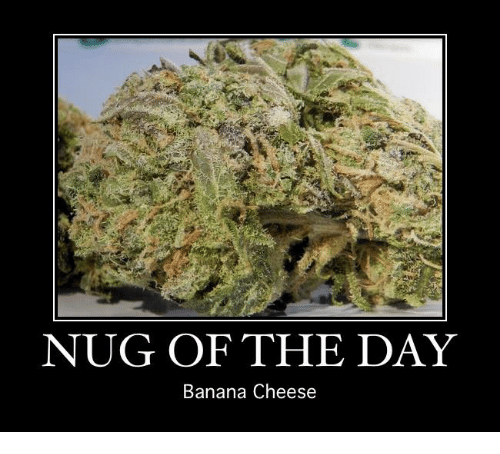nug of the day banana cheese 12945166 ✅ 25 best memes about cheese cheese memes