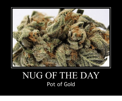 Memes, 🤖, and Gold: NUG OF THE DAY  Pot of Gold