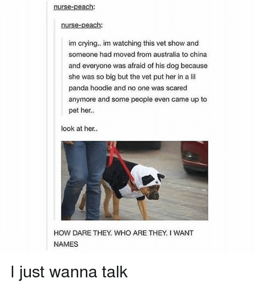 Crying, Memes, and China: nurse-peach  nurse-peach:  im crying. im watching this vet show and  someone had moved from australia to china  and everyone was afraid of his dog because  she was so big but the vet put her in a lil  panda hoodie and no one was scared  anymore and some people even came up to  pet her.  look at her.  HOW DARE THEY WHO ARE THEY. I WANT  NAMES I just wanna talk