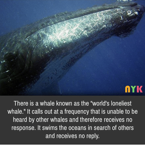 nYK There Is a Whale Known as the World's Loneliest Whale It