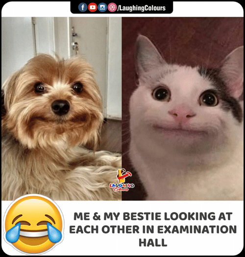 Indianpeoplefacebook, Looking, and Hall: O©/LaughingColours  f  LACGHING  Colours  ME & MY BESTIE LOOKING AT  EACH OTHER IN EXAMINATION  HALL