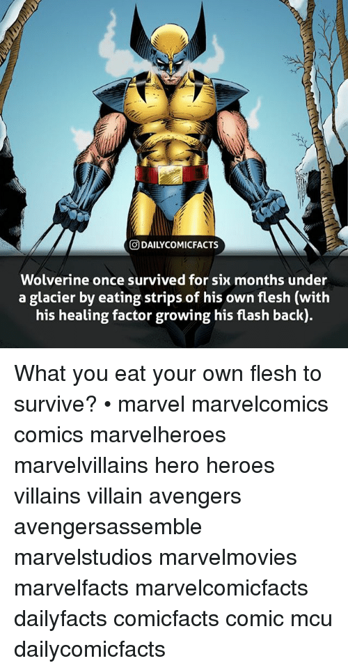 Memes, Wolverine, and Avengers: O DAILYCOMICFACTS  Wolverine once survived for six months under  a glacier by eating strips of his own flesh (with  his healing factor growing his flash back) What you eat your own flesh to survive? • marvel marvelcomics comics marvelheroes marvelvillains hero heroes villains villain avengers avengersassemble marvelstudios marvelmovies marvelfacts marvelcomicfacts dailyfacts comicfacts comic mcu dailycomicfacts