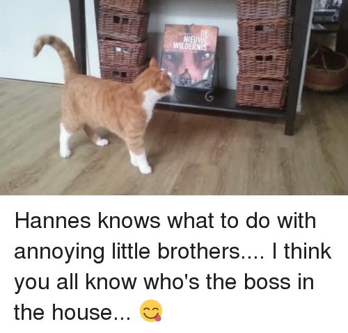o hannes knows what to do with annoying little brothers 5453753 ✅ 25 best memes about annoying little brothers annoying little