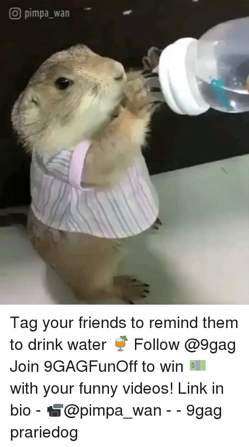 9gag, Friends, and Funny: O pimpa_wan Tag your friends to remind them to drink water 🍹 Follow @9gag Join 9GAGFunOff to win 💵 with your funny videos! Link in bio - 📹@pimpa_wan - - 9gag prariedog