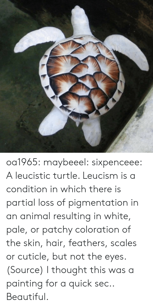 Beautiful, Reddit, and Tumblr: oa1965: maybeeel:  sixpenceee:  A leucistic turtle. Leucism is a condition in which there is partial loss of pigmentation in an animal resulting in white, pale, or patchy coloration of the skin, hair, feathers, scales or cuticle, but not the eyes. (Source)  I thought this was a painting for a quick sec..   Beautiful.