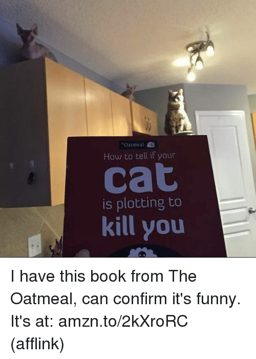 Oatmeal How To Tell If Your Cat Is Plotting To Kill You I Have This