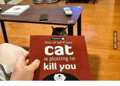 Oatmeal How To Tell If Your Cat Is Plotting To Kill You How To