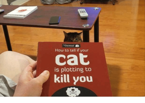 how to know your cat is plotting to kill you