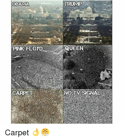 Memes, Pink Floyd, and Pink: OBAMA  PINK FLOYD  CARPET  TRUMP  QUEEN  NO TIV SIGNAL Carpet 👌😤