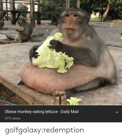 Tumblr, Blog, and Daily Mail: Obese monkey eating lettuce - Daily Mail  475 views golfgalaxy:redemption