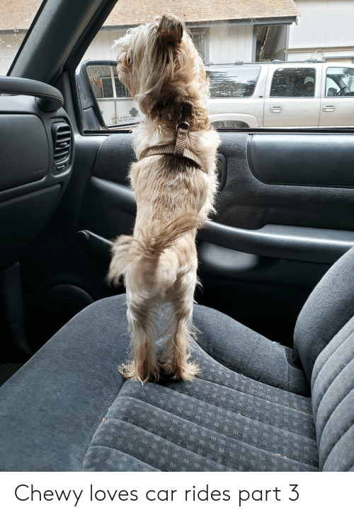Mirror, Car, and Closer: OBJECTS IN MIRROR ARE CLOSER  THAN THEY APPEAR  (0  E  =e  我价三1月萬 Chewy loves car rides part 3