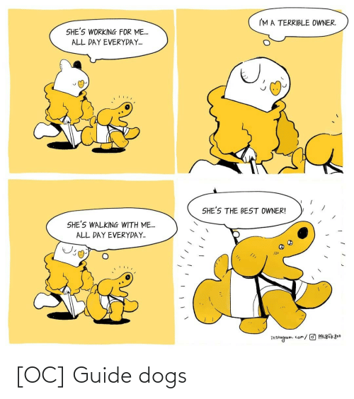 Dogs, Guide, and Guide Dogs: [OC] Guide dogs