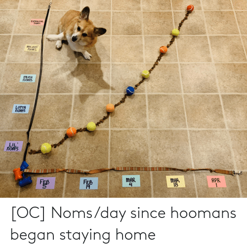 Home, Day, and Noms: [OC] Noms/day since hoomans began staying home