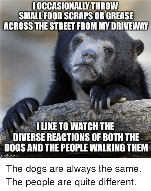 Dogs, Food, and Grease: OCCASIONALLY THROW  SMALL FOOD SCRAPS OR GREASE  ACROSS THE STREET FROM MY DRIVEWAY  ILIKE TO WATCH THE  DIVERSE REACTIONS OF BOTH THE  DOGS AND THE PEOPLE WALKING THEM  imgflip.com