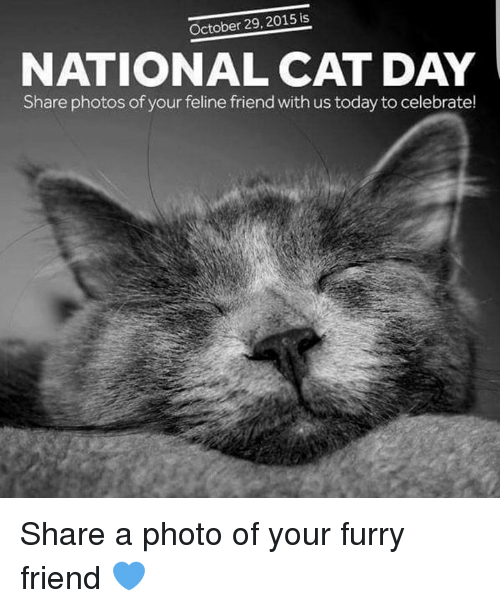 October 29 2015 Is National Cat Day Share Photos Of Your Feline Friend With Us Today To Celebrate Share A Photo Of Your Furry Friend Dank Meme On Me Me