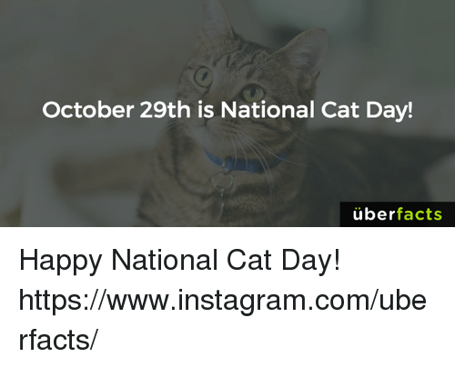october 29th is national cat day uber facts happy national 5618527 ✅ 25 best memes about happy national cat day happy national cat