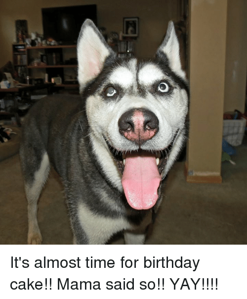 Odeo Its Almost Time for Birthday Cake Mama Said So YAY