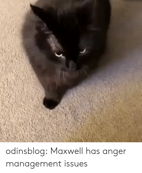 Target, Tumblr, and Blog: odinsblog:   Maxwell has anger management issues
