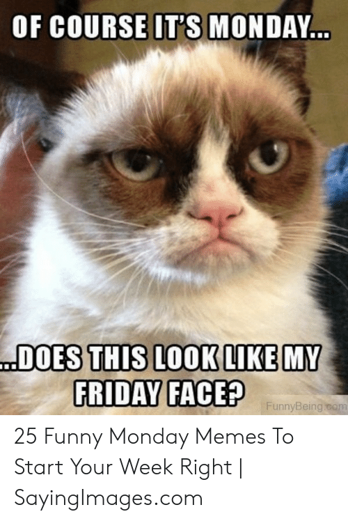 Of COURSE IT'S MONDAY DOES THIS LOOK LIKE MY FRIDAY FACE