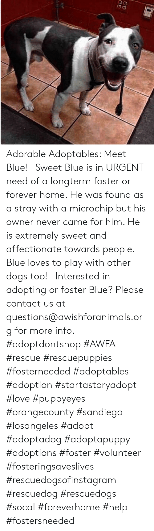 Dogs, Love, and Memes: OG Adorable Adoptables: Meet Blue!   Sweet Blue is in URGENT need of a longterm foster or forever home. He was found as a stray with a microchip but his owner never came for him. He is extremely sweet and affectionate towards people. Blue loves to play with other dogs too!   Interested in adopting or foster Blue? Please contact us at questions@awishforanimals.org for more info.  #adoptdontshop #AWFA #rescue #rescuepuppies #fosterneeded #adoptables #adoption #startastoryadopt #love #puppyeyes #orangecounty #sandiego #losangeles #adopt #adoptadog #adoptapuppy #adoptions #foster #volunteer #fosteringsaveslives #rescuedogsofinstagram #rescuedog #rescuedogs #socal #foreverhome #help #fostersneeded
