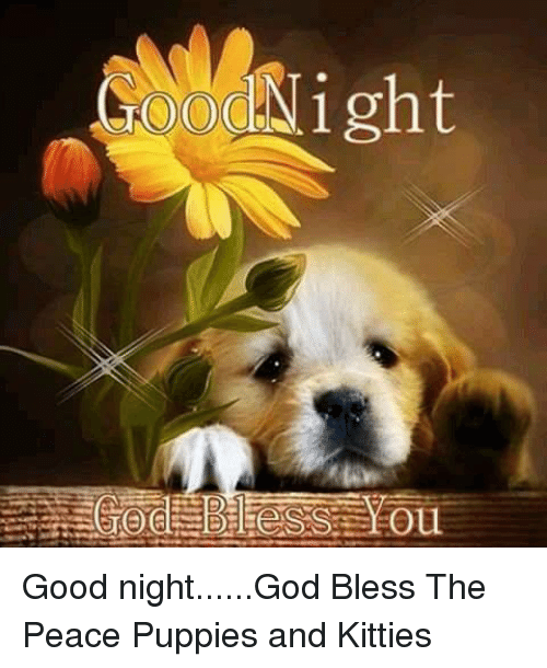 Og Night Ou Good Nightgod Bless The Peace Puppies And Kitties