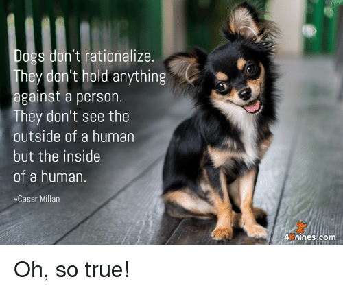 Memes, True, and 🤖: ogs don't rationalize  hey don't hold anything  against a person  They don't see the  outside of a human  but the inside  of a human.  Cesar Millan  4 knines.com Oh, so true!