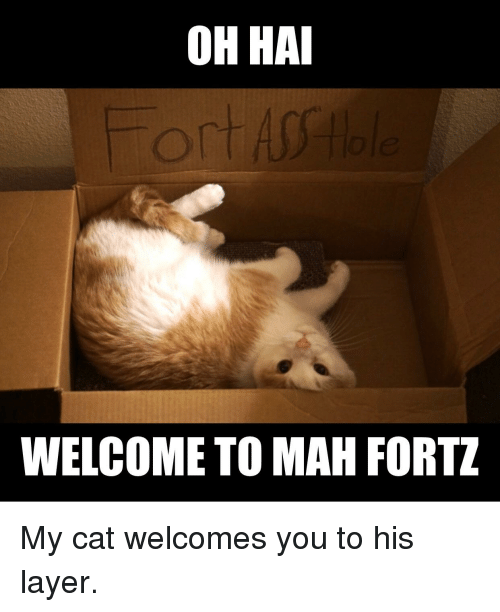 25+ Best Memes About LOLcats