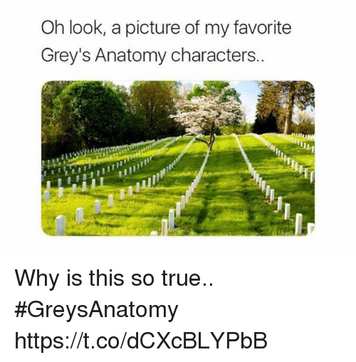 Memes, True, and Grey's Anatomy: Oh look, a picture of my favorite  Grey's Anatomy characters. Why is this so true.. #GreysAnatomy https://t.co/dCXcBLYPbB