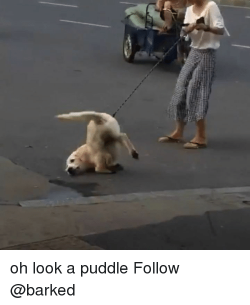 Memes, 🤖, and Look: oh look a puddle Follow @barked