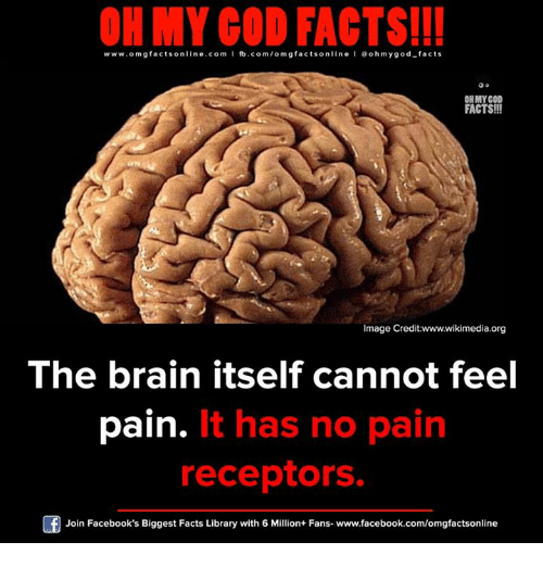 Facebook, Facts, and God: OH MY GOD FACTS!!!  www.omg facts online.com I fb.com/om gfacts online l ao hmygod-facts  OH MY GOD  FACTS!!!  Image Credit:wwwwikimedia.org  The brain itself cannot feel  It has no pain  pain.  receptors.  Join Facebook's Biggest Facts Library with 6 Million+ Fans- www.facebook.com/omgfactsonline
