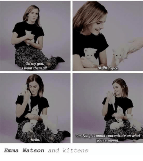Emma Watson, God, and Hello: oh my god.  Hi, little guy  want them all  I'm dying, Icannot concentrate on what  Hello.  you're saying.  Emma Watson and kittens