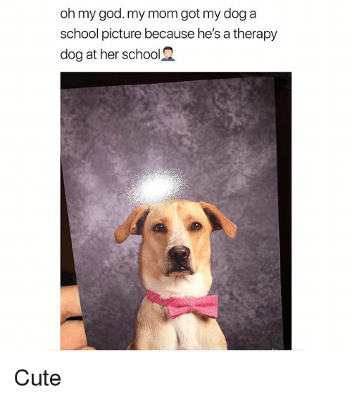 Cute, God, and Memes: oh my god.my mom got my doga  school picture because he's a therapy  dog at her school2 Cute