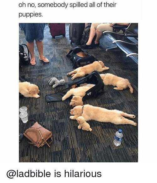 Funny, Puppies, and Hilarious: oh no, somebody spilled all of their  puppies @ladbible is hilarious