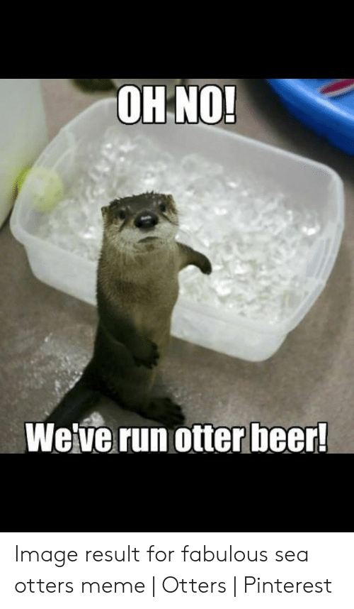 Beer, Meme, and Otters: OH NO  Weve runotter beer Image result for fabulous sea otters meme | Otters | Pinterest