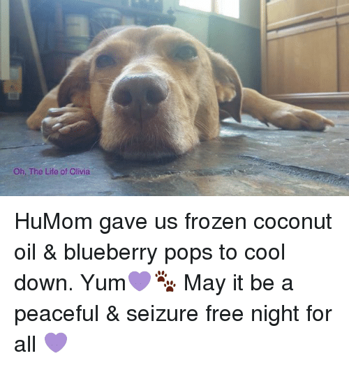 Frozen, Life, and Memes: Oh. The Life of Olivia HuMom gave us frozen coconut oil & blueberry pops to cool down. Yum💜🐾 May it be a peaceful & seizure free night for all 💜