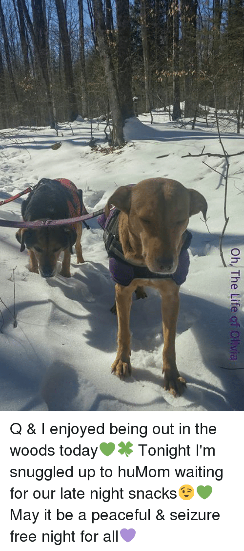 Life, Memes, and Free: Oh, The Life of Olivia Q & I enjoyed being out in the woods today💚🍀 Tonight I'm snuggled up to huMom waiting for our late night snacks😉💚 May it be a peaceful & seizure free night for all💜