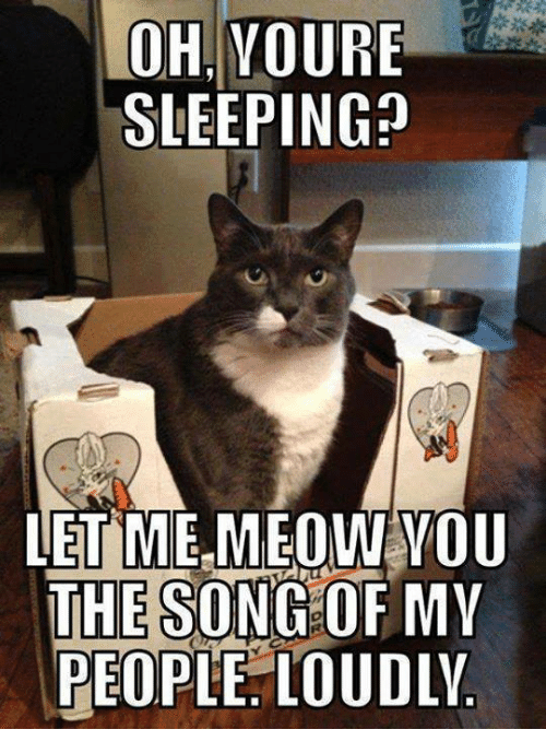 Ohvoure Sleeping Let Me Meow You The Song Of My People