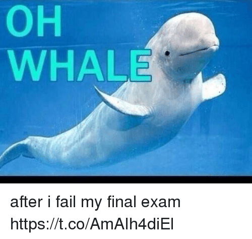 Fail, Girl Memes, and Whale: OH  WHALE after i fail my final exam https://t.co/AmAIh4diEl