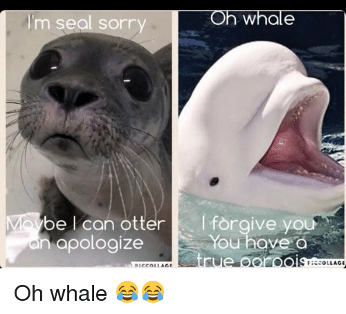 oh whale m seal sorry be l can otter i 11305445 oh whale m seal sorry be l can otter i forgive yo you have a en,I Forgive You Meme