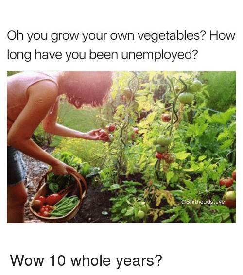 Wow, Dank Memes, and Been: Oh you grow your own vegetables? How  long have you been unemployed?  Shitheadsteve Wow 10 whole years?