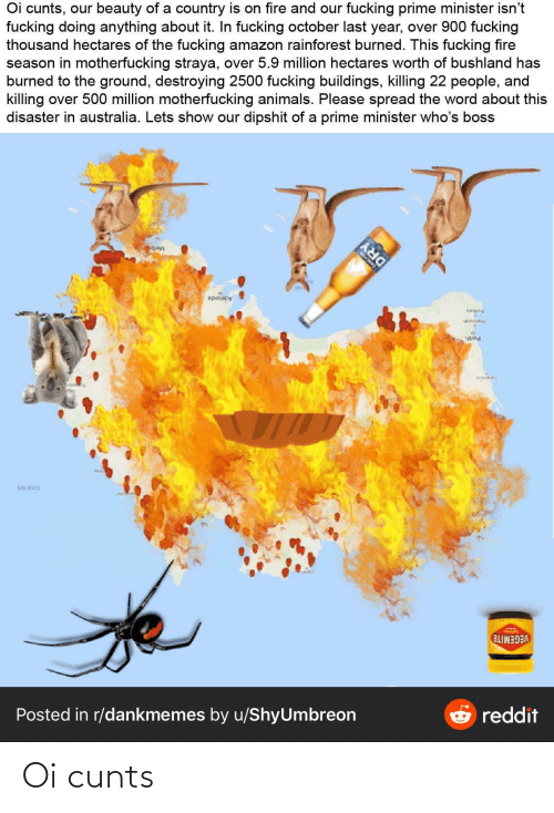 Amazon, Animals, and Fire: Oi cunts, our beauty of a country is on fire and our fucking prime minister isn't  fucking doing anything about it. In fucking october last year, over 900 fucking  thousand hectares of the fucking amazon rainforest burned. This fucking fire  season in motherfucking straya, over 5.9 million hectares worth of bushland has  burned to the ground, destroying 2500 fucking buildings, killing 22 people, and  killing over 500 million motherfucking animals. Please spread the word about this  disaster in australia. Lets show our dipshit of a prime minister who's boss  Adelaide  kanpung  Perth  VEGEMITE  O reddit  Posted in r/dankmemes by u/ShyUmbreon  DRY Oi cunts