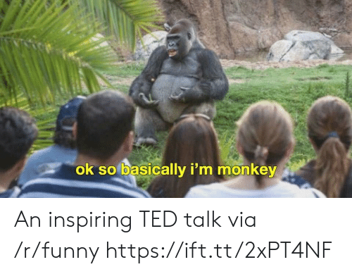 Funny, Ted, and Monkey: ok so basically i'm monkey An inspiring TED talk via /r/funny https://ift.tt/2xPT4NF