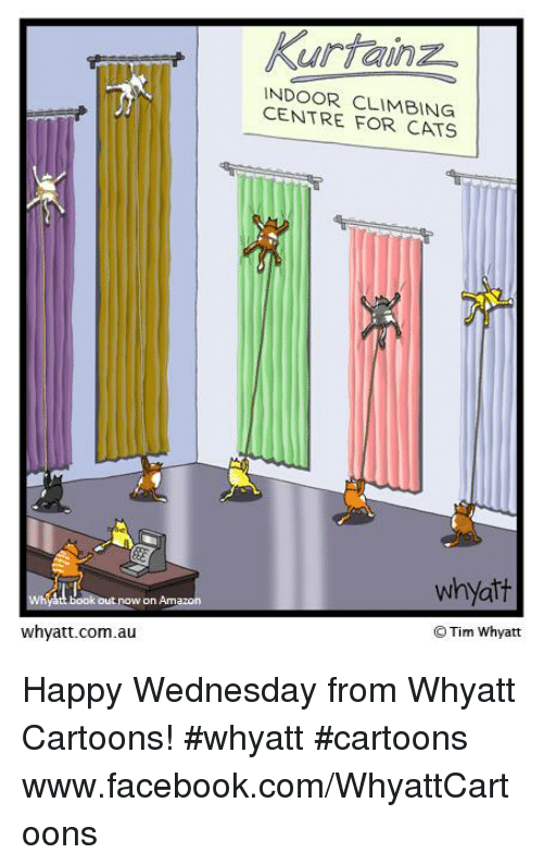Amazon, Memes, and Cartoon: okout now on Amazon  whyatt.com.au  kurtainz  INDOOR CENTRE FOR CATS  whyatt  O Tim Whyatt Happy Wednesday from Whyatt Cartoons! #whyatt #cartoons  www.facebook.com/WhyattCartoons